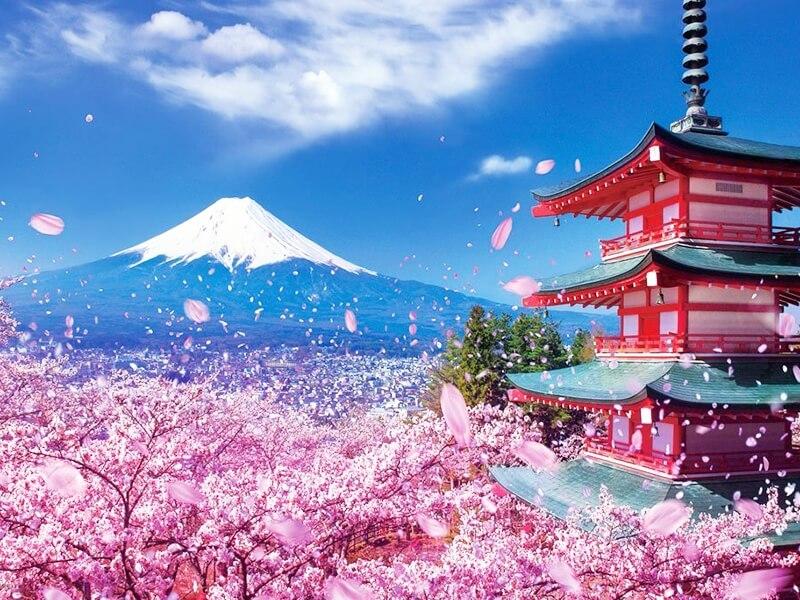 Du học Nhật Bản uy tín nhất tại Kiến An